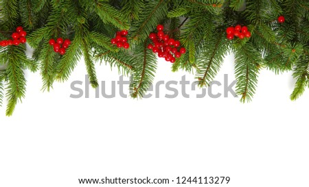 Fir tree branch isolated on white background #1244113279
