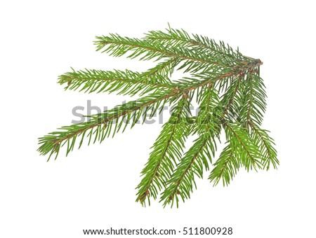 Fir tree branch isolated on white background #511800928
