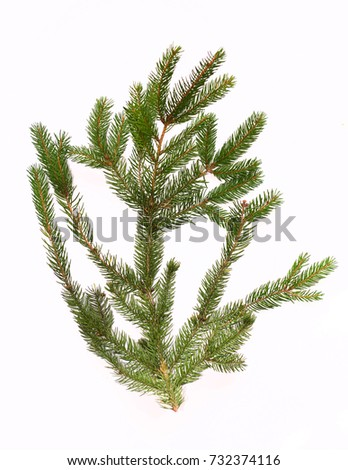Fir tree branch isolated on white background #732374116