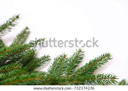 Fir tree branch isolated on white background #732374236