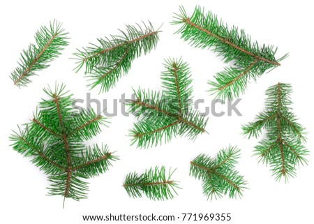 Fir tree branch isolated on white background. Christmas background. Top view #771969355