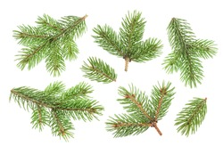 Fir tree branch isolated on white background with clipping path