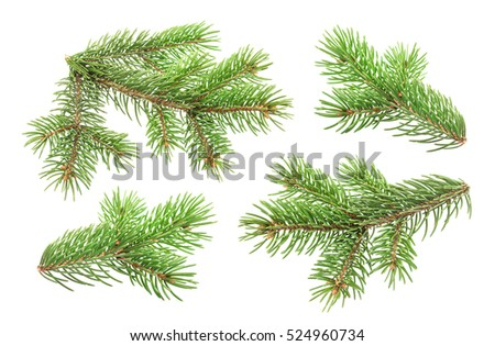 Fir tree branch isolated on white background with clipping path #524960734