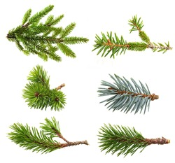 Fir tree branch set  isolated on white.