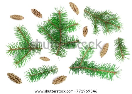 Fir tree branch with cones isolated on white background. Christmas background. Top view #771969346