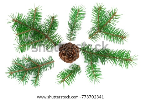 Fir tree branch with cones isolated on white background. Christmas background. Top view #773702341