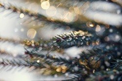 Fir-tree branches sparkling on the sun in ice droplets.
