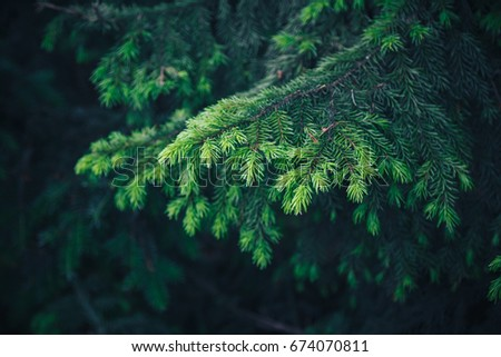 Shutterstock Fir tree brunch close up. Shallow focus. Fluffy fir tree brunch close up. Christmas wallpaper concept. Copy space.