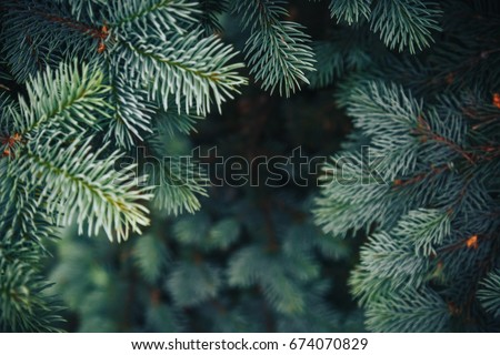 Fir tree brunch close up. Shallow focus. Fluffy fir tree brunch close up. Christmas wallpaper concept. Copy space. - Shutterstock ID 674070829