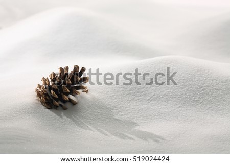 Fir tree cone on White snow background #519024424