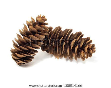 fir tree cones on a white background