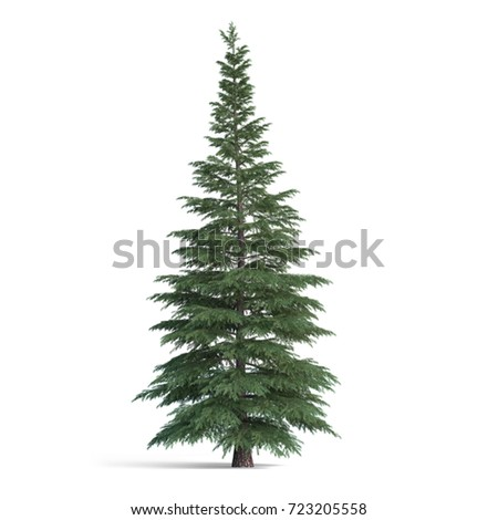 Fir tree isolated, 3d illustration
