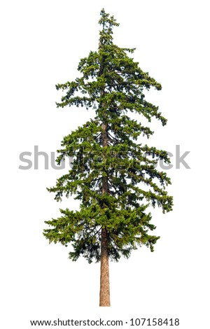 Fir tree isolated on white background #107158418