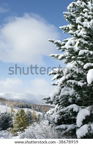 Fir tree under the snow and mountain landscape