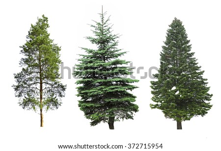 Fir-trees, isolated on white #372715954