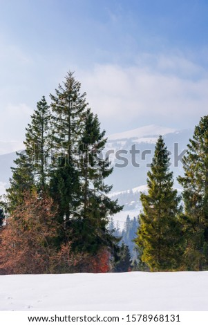 fir trees on the snow covered mountain meadow. beautiful winter landscape with the distant ridge. sunny weather with fluffy clouds on the sky. scenic open vista of transcarpathia #1578968131