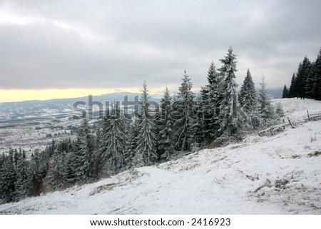 fir trees over the frozen alpine plane