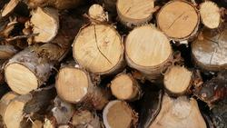 fir wood piled under a canopy