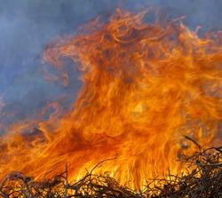 fire and flames like lion