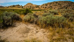 Fire Ant mounds on the prairie in the Granite Mountains, Wyoming