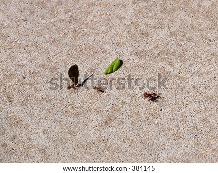 Fire ants working.