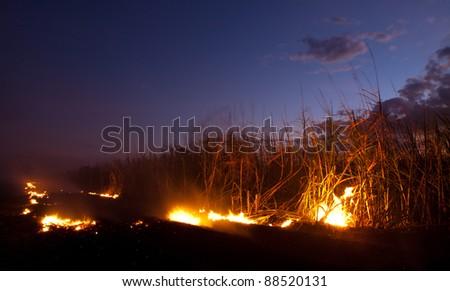 Fire at sugar cane field near Bunderberg Australia