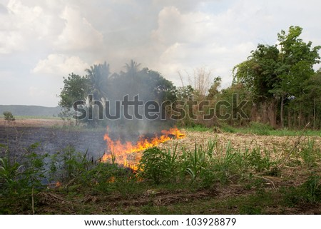 Fire burning dried sugarcane and grass field caused air pollution and global warming