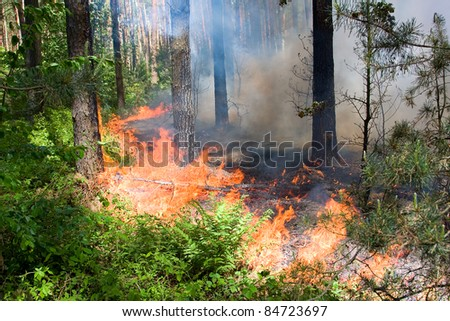 Fire burning in a pine forest