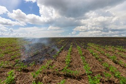 Fire burning on crop field - hot accident lighting bolt