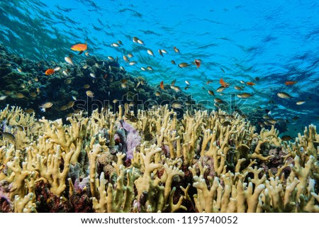 Fire Corals at the Red Sea Egypt #1195740052