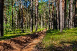 Fire-fighting forest plowing. Trench in the forest.The forest protection strip.