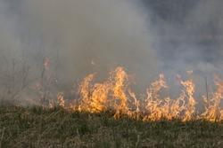 fire grass