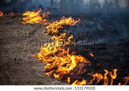 fire grass spring - stock photo