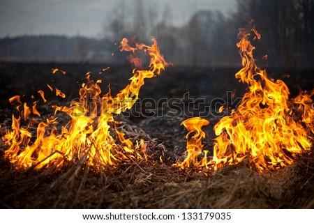 fire grass spring