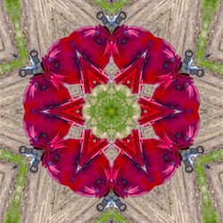 Fire hydrant square image with kaleidoscope effect of multiple geometric design elements