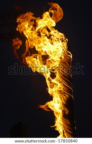 Fire in a tree