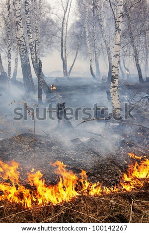 Fire in a wood