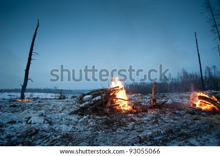 fire in the forrest - stock photo