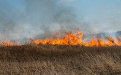 fire in the steppe, the grass is burning destroying everything in its path