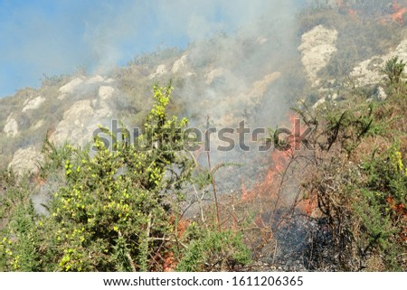 fire in thickets of green mountains to avoid uncontrolled forest fires in Asturias Foto stock ©