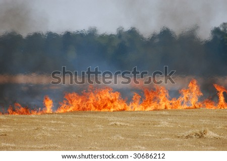 Fire of grass