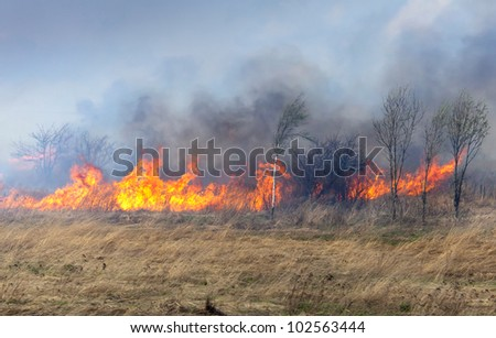 Fire on dry grass and trees inflated by a strong wind - stock photo