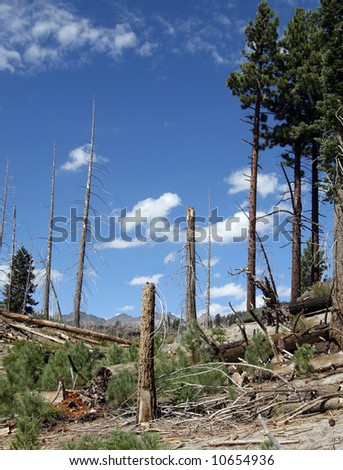 Fire ravaged section of forest between Devils Postpile and Rainbow Falls at Mammoth Mountain.