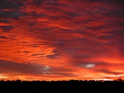 Fire red and orange sunset, low black tree line silhouetted in the foreground, very brightly coloured sunset.  Outback Australia.
