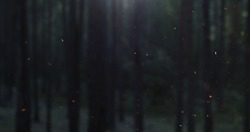 fire sparks slowly rise in front of blurred night forest, 4k prores footage
