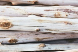 fire wood from pine tree, wooden pole
