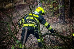 Firefighters in action clear the fallen trees after a windy storm.