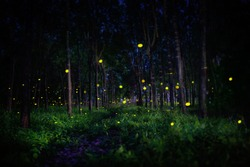 fireflies in the forest trees at night