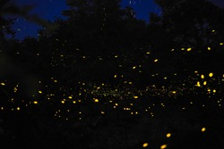 Fireflies in the wild forest.