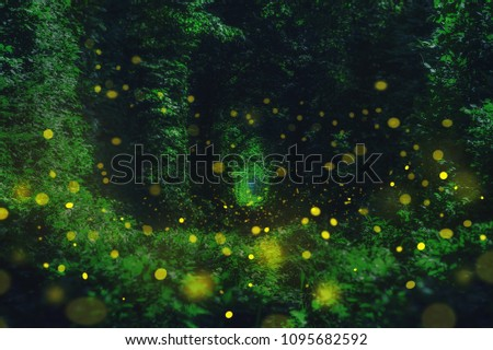 Fireflies in the wild forest. famous romantic place called Tunnel of Love, Klevan, Ukraine.  natural summer (spring) background (collage) #1095682592